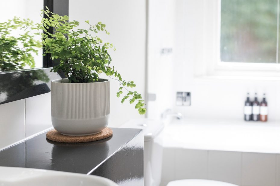 Plant in bathroom